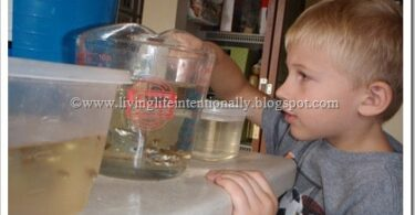 Amaze your kids with this Guppy Fish Science Experiment where you will breed guppies while learning about genetics, life cycles, and so much more! Includes a free printable observation book to help your students write down observations.