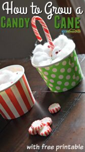 how-to-grow-a-candy-cane-christmas-kids-activity