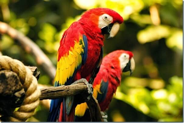 Animal Kingdom - Birds in the FLights of Wonder Show