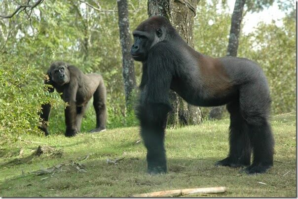 Animal Kingdom Pangani Forest Exploraition Walking Trail