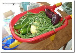 home vegetable garden tips