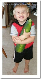 giant zucchini from home vegetable garden