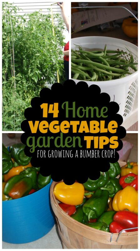 14 Home Vegetable Garden Tips - simple, practical advice for growing a bumber crop of vegetables your family will love! #vegetablegaren #backyardgarden #gardeningtips #momstuff