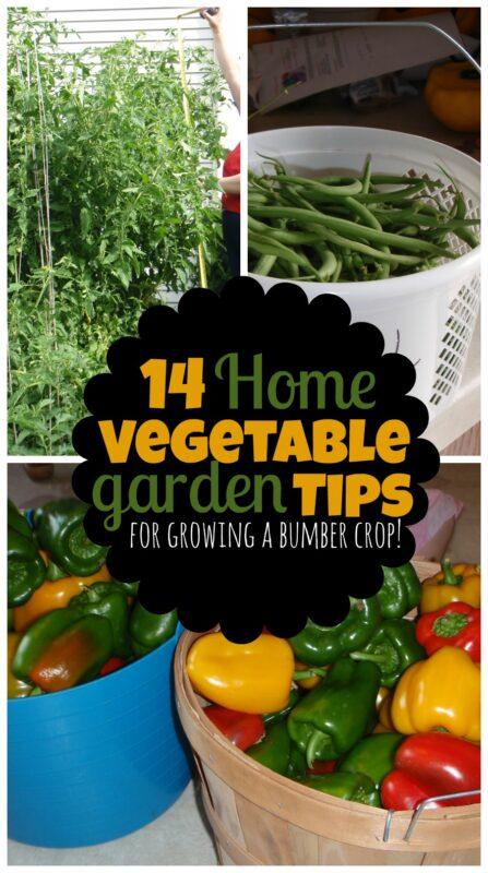 14 Home Vegetable Garden Tips - simple, practical advice for growing a bumber crop of vegetables your family will love! #vegetablegaren #backyardgarden #gardeningtips #momstuff