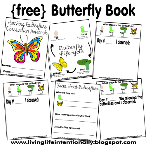 Free Hatching Butterfly Printable