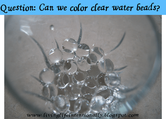 water bead experiment #1