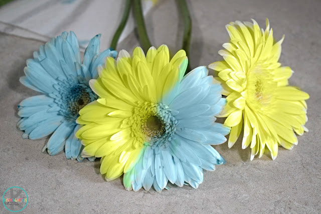 easy-flower-science-experiment
