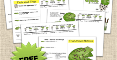 FREE Life Cycle of a Frog Worksheets