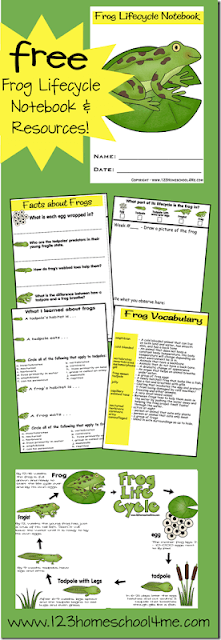 Kids will have fun learning about the life cycle of a frog with this free printable notebook filled with interesting information, life cycle chart, vocabulary, and a space for recording their observations as they watch tadpoles become frogs in this homeschool science experiment. Simply download pdf file with life cycle of a frog worksheet and you are ready to play and learn this spring and summer!