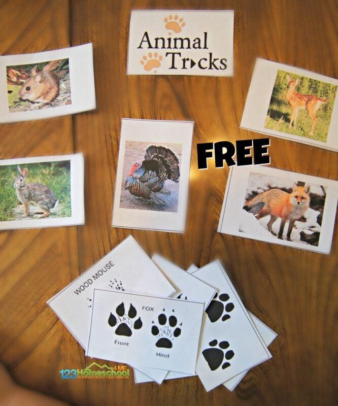 free-anima-tracks-printable-activity-for-kids