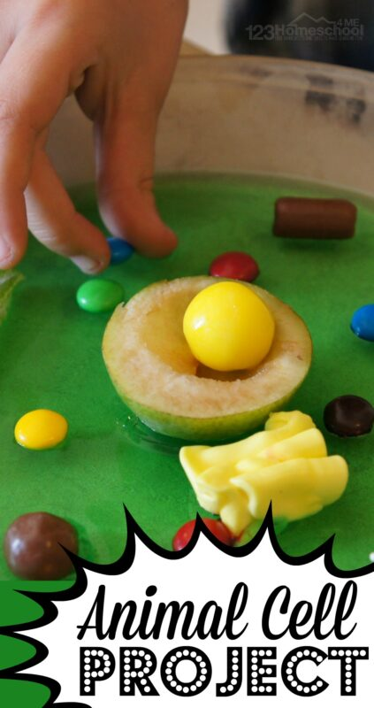 Jello Animal Cell Project - this is such a fun, hands on science project for kids learning about animal cells. Great resources and explanation on how to use various items including candy to make and edible animal cell #animalcells #scienceforkids #homeschooling