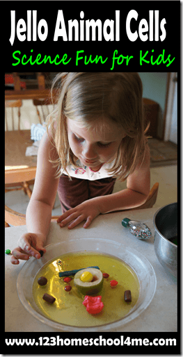 How to make Jello Animal Cells - this is such a fun, hands on science project for kids learning about animal cells. Great resources and explanation on how to use various items including candy to make and edible animal cell (homeschool, science fair)