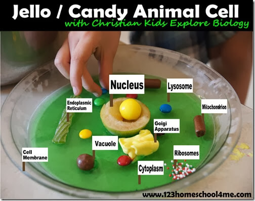 Use candy to learn about the different parts of a cell. I'm guessing the golgi apparatus has never been so delectable.