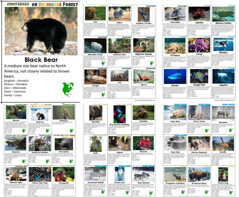 free printable animal flashcards