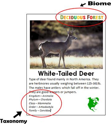 FREE Animal Fact Cards