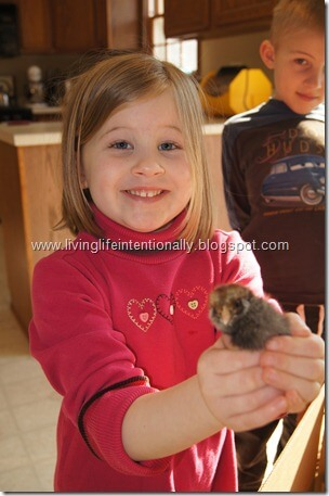 Children love holding cute baby chickens