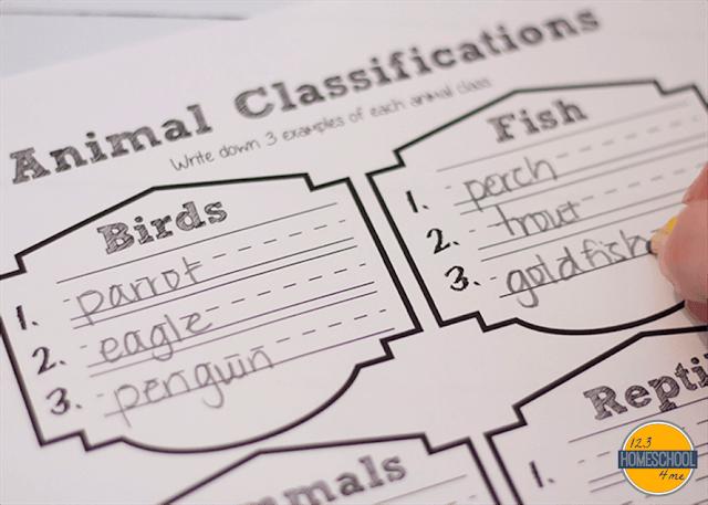 animal classifications worksheet