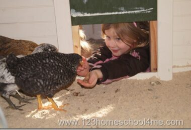 Backyard Chickens Moving into the Chicken Coop