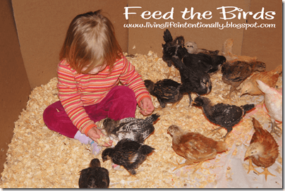 2 year old feeds her pet chickens