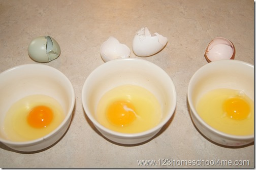 Egg Yolk Comparison - Backyard Chickens