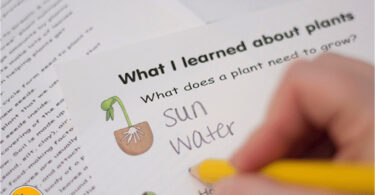 FREE-Life-Cycle-of-a-Plant-Worksheets
