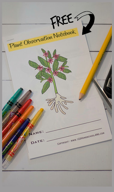 Kids will have fun learning about the life cycle of a plant with this free printableplant life cycle worksheet for kindergarten, first grade, 2nd grade, 3rd grade, 4th grade, and 5th grade students. Using these life cycle of a plant worksheet, children will learn what plants need to grow, write down observations as they grow their own bean seed, label the parts of a plant, see the plant lifecycle, and learn new botany science vocabulary. Simply download pdf file with