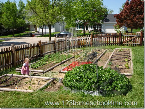 Preparing garden beds for a small suburban vegetable garden
