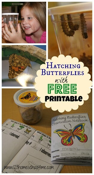 FREE butterfly observation notebook and great pictures as caterpillars turn into butterflies. Fun spring or summer kids activities to help kids learn about life cycles with hands on science #lifecycles #butterfly #kindergarten