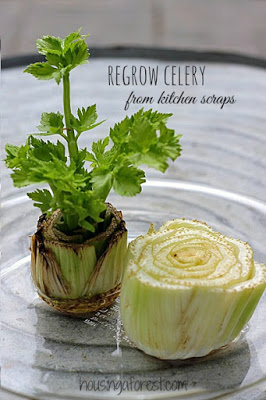 celery-science-experiment