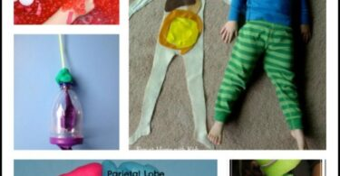 Human Body Kids Activities