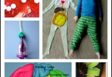 Human Body Kids Activities