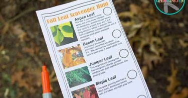 Fall LEAF Scavenger Hunt