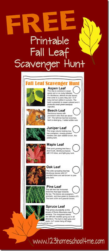 Free printable FALL scavenger hunt for kids! This is a fun nature scavenger hunt that helps kids learn about fall leaves with this fun scavenger hunt ideas outdoor.. Various choices for kids from toddler, preschool, kindergarten, first grade, 2nd grade, and 3rd grade. Perfect fall activity for kids