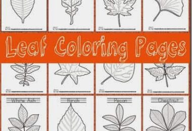 Realistic Leaf Coloring Pages
