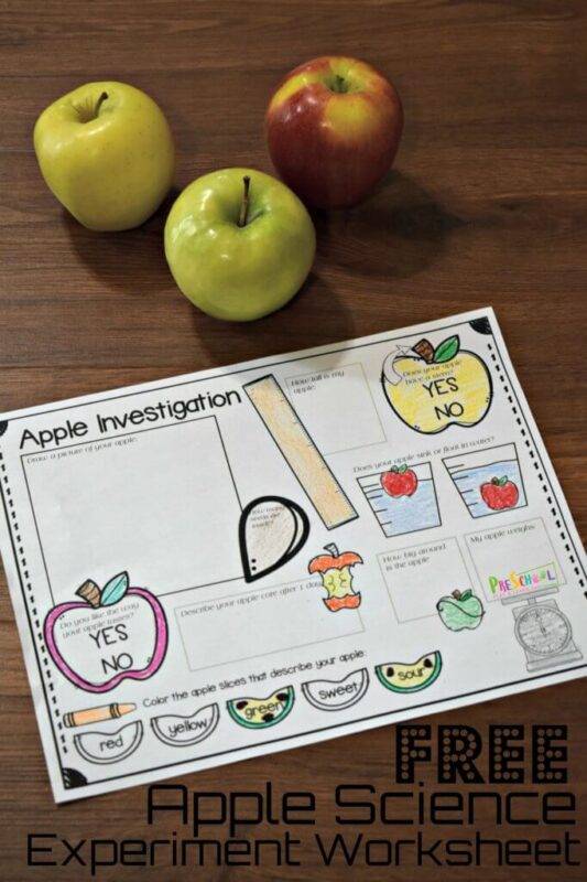 FREE Apple Science Worksheet
