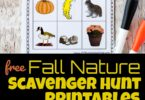 Get outdoors, getting exercise, sunlight, and exploring nature with these FUN, free printable Fall Nature Scavenger Hunt Printables. Students will learn to become observant of the world around them as they enjoy these fall scavenger hunts for toddler, preschool, pre k, kindergarten, first grade, 2nd grade, and 3rd grade students.