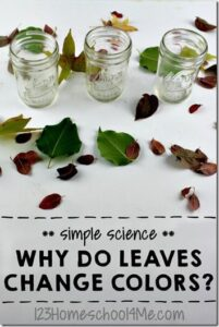 Why do Leaves Change Color in the Fall Answers Find out with this simple, fun, and informative Science Experiment for kids in preschool, kindergarten, 1st grade, 2nd grade and older too. Perfect fall activities for kids. (homeschool, science) AWESOME EXPERIMENT! MUST TRY!!!