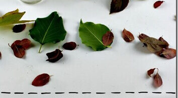 Why-do-Leaves-Change-Color-science-experiment