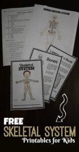 skeletal system worksheet