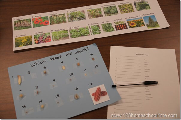 seed activity for kids in sunday school