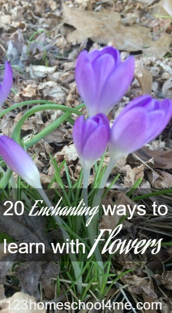 20 CREATIVE ways to learn with flowers this spring and summer