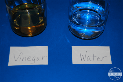 Jelly Bean STEM Rainbow Experiment Liquids