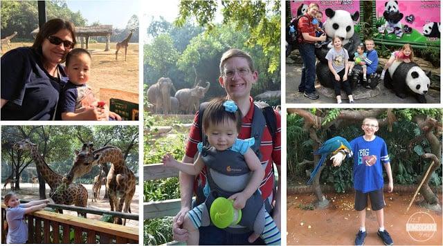 safari park in guangzhou china is AMAZING