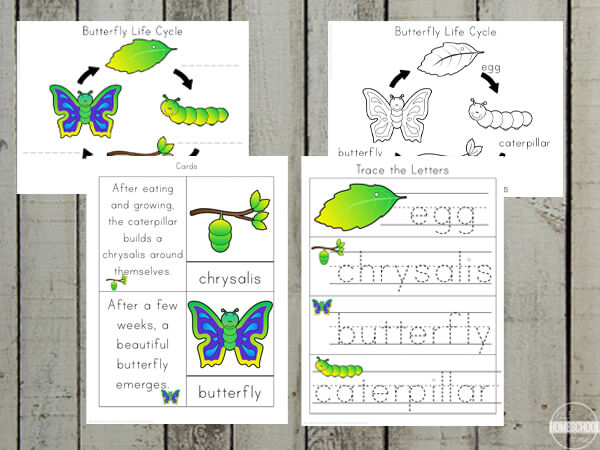 life cycle of a butterfly worksheet for preschool, pre k, kindergarten, grade 1