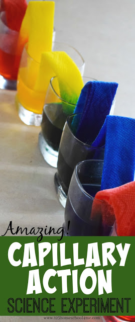 Your kids are going to be blown away by this fun, colorful capillary action experiment that teaches a simple science principle . Use this capillary action for kids project with toddler, preschool, pre-k, kindergarten, first grade, 2nd grade, and 3rd grade students. This capillary action science experiment is sometimes called a walking water experiment. No matter what you call it, this beautiful walking rainbow activity is sure to AMAZE kids of all ages!