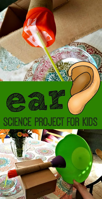 Are you learning about the human body for kids? As we are learning about the five senses in our anatomy lessons we decided to learn more about our amazing ears and how they hear sound. This model of ear for school project is a simple way for kids to understanding how the human ear works while creating aear model project. Try this easyhuman body projectwith preschool, pre-k, kindergarten, first grade, 2nd grade, 3rd grade, and 4th grade students.