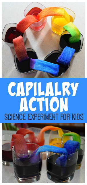 Your kids are going to be blown away by this fun, colorful capillary action experimentthat teaches a simple science principle . Use thiscapillary action for kids project with toddler, preschool, pre-k, kindergarten, first grade, 2nd grade, and 3rd grade students. This capillary action science experiment is sometimes called awalking water experiment. No matter what you call it, this beautifulwalking rainbowactivity is sure to AMAZE kids of all ages!