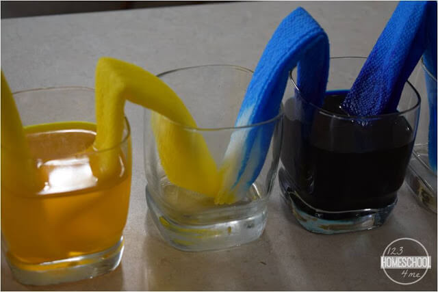 watch the walking water science experiment mix blue and yellow to make green