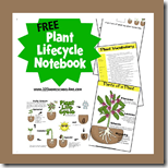 1st Grade plant lifecycle notebook