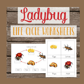 ladybug lifecycle worksheets